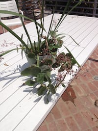 Flowering and succulent plant combination