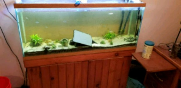 2 55 Gallon Fish Tanks With Stands