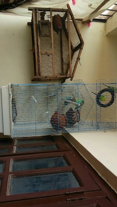 Budgies cage with 4 pairs of budgies