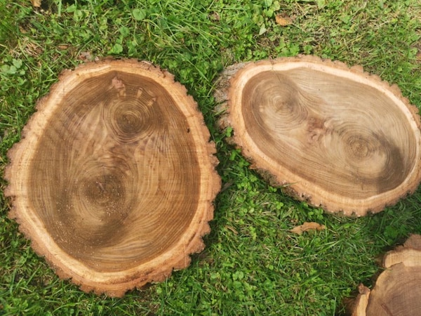 wood round slabs walnut  0