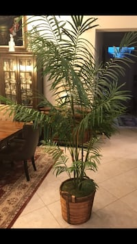 Silk potted palm tree