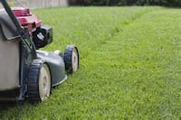Need your grass cut? - $20 Kingston, K7M 8V6