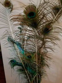 peacock feather home decor Calgary, T2W 2T6