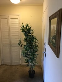 2 Beautiful Accent Green Artificial Trees Silver Spring, 20910