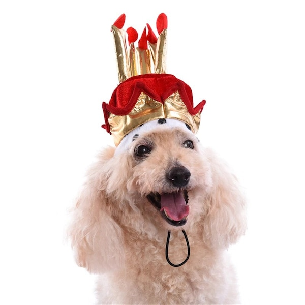 Birthday Hat For Dogs Or Cats