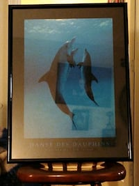 Picture of dolphins  Omaha, 68114