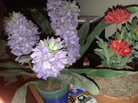 two purple and red petaled flowers
