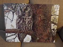 Owl canvass picture