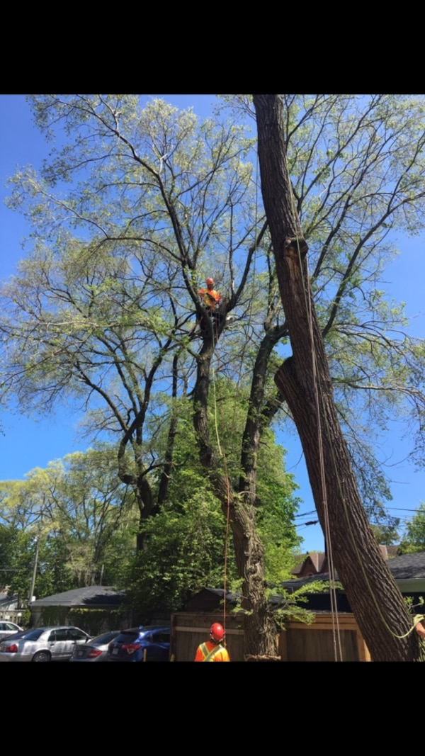 Tree care in Gta and all around Lake Simcoe!