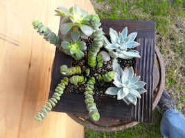 Shou Sugi Ban handcrafted wooden planter  with Succulents