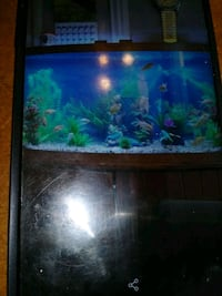 55 gal. curved glass fish tank with stand