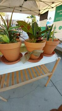 House Plants 8inch Terra cotta pot Los Angeles, 90042