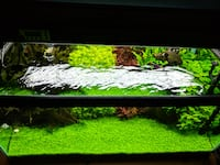 black framed clear glass fish tank AUSTIN