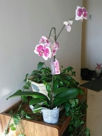 pink and white petaled orchid flower