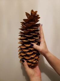 JUMBO Extra Large Pine Cones range from 9-11 inches long !!  Whitby, L1P 1M9