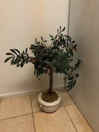 Olive tree/artificial plant