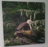 Canvas of a bald eagle Ottawa, K2H 7L1