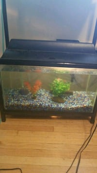 10 gallon fish tank Saint Thomas, N5P 3M3