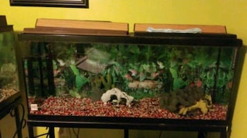 Fish Tanks with stands