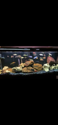 55 gallon with cherrywood stand trade for a MacBookPro 2015 or better!