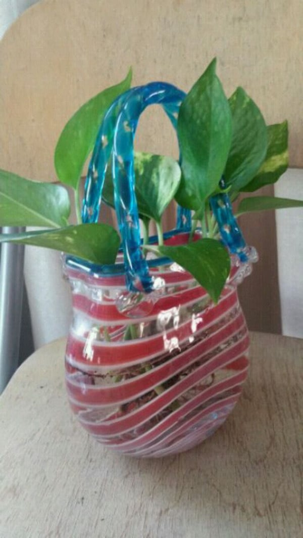 Pothos in handblown glass purse vase 78f292aa-08c8-45f3-a520-861c223dbed7