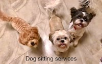 Dog sitting services-l take care of your dog at my house Orlando