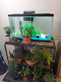 20 gal aquarium w/ fish stand chemicals filterfood Annandale, 22003