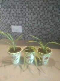 two white and green ceramic vases Hampstead, H3X 1S2