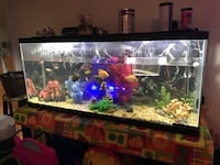 55 Gallons Aquarium With African And South American Cichlids Complete Set Ottawa, K1V 9N5