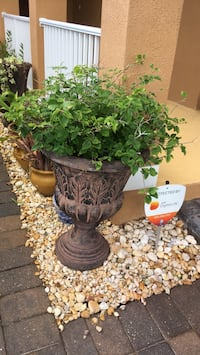 bourgainvillea with pots included Melbourne, 32940