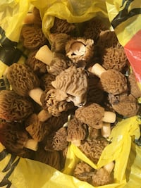 brown and white mushroom lot Tiny, L9M 0B9