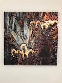 Cactus patch print on stretched canvas Washington, 20008