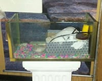 Small fish tank  Waukegan