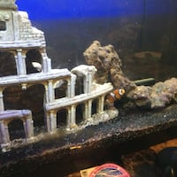 Salt water fish tank everything included even the two clown fish Gadsden, 35903