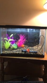 20 gallon fish tank kit Charles Town, 25414