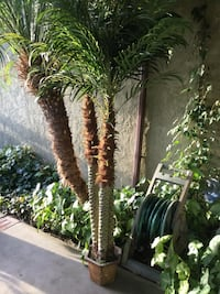 Beautiful Artificial Palm Trees