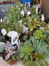 Lower priced succulents and arrangements