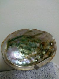 Large abalone shell spectacular colors Kent, 98030