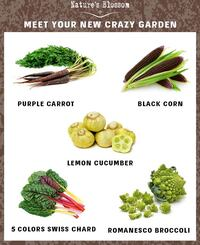 Brand new Sow and grow 5 Unusual Vegetables kit  Hertford, 27944