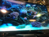 TVS for sale $225+up New Westminster, V3M