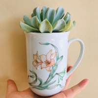 Healthy succulent in a flory drainage cup Richmond Hill, L4C 6R5