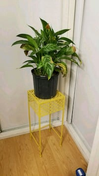 Large Plant and Beautiful Plant Stand Sunnyvale, 94089
