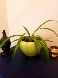 green spider in olive ceramic container