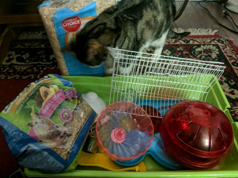 Hampster cage and accessories including bedding and food bb98cba2-0b01-45c9-9fc7-5f449f7b859a