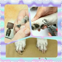 gray pet nail cutters photo collage