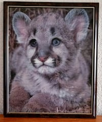 Baby cub Grand Junction, 81501