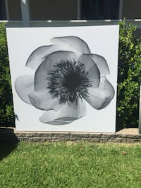 painting black poppy