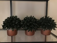 Decorative artificial plants Alexandria, 22305