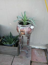 brown potted green plant