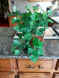 Fake Ivy Plant in Wicker Basket